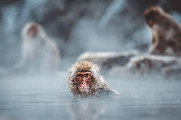 Monkey Bathing