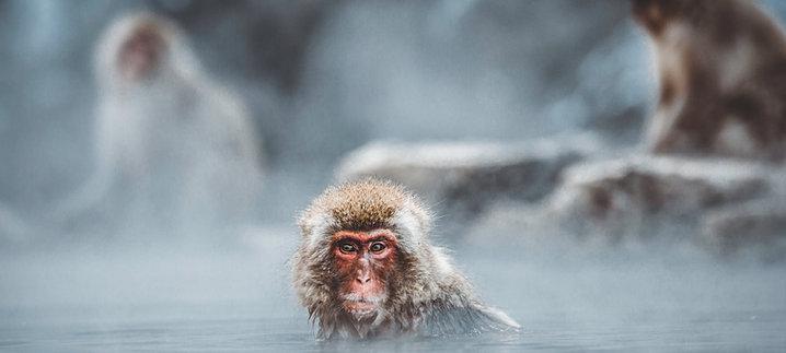 Join a Snow Monkey Tour