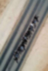 Dead Ants Skeleton.jpg