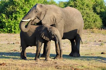 Elephants.png