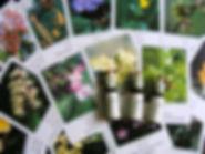 FlowerEss241.jpg