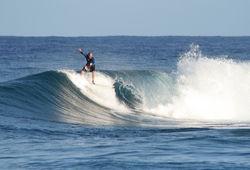Reef Surf