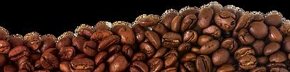 Beans L.png