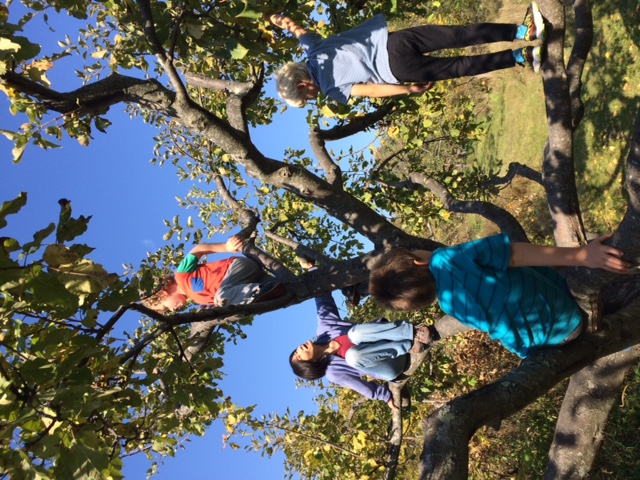 Climbing in the Apple Orchard