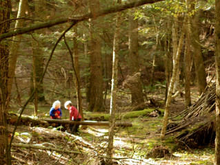 Forest Exploration- Building the Foundations of Thought