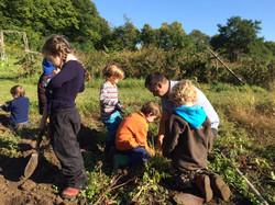 Garden Exploration