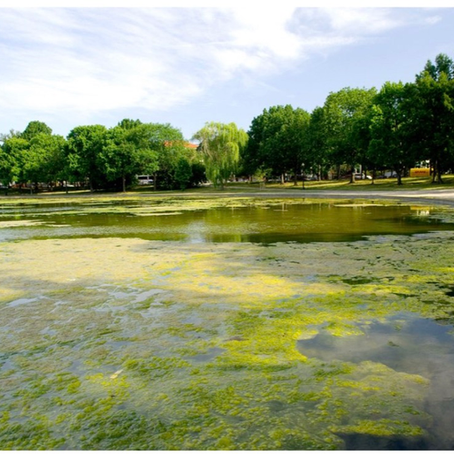 Algae Blooms & Our Great Lakes