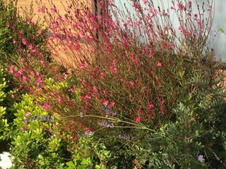 Exposition ensoleillée : des vivaces fleuries tout l'été
