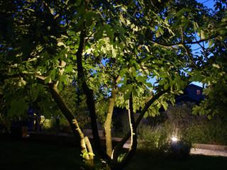 Mise en lumière de votre jardin