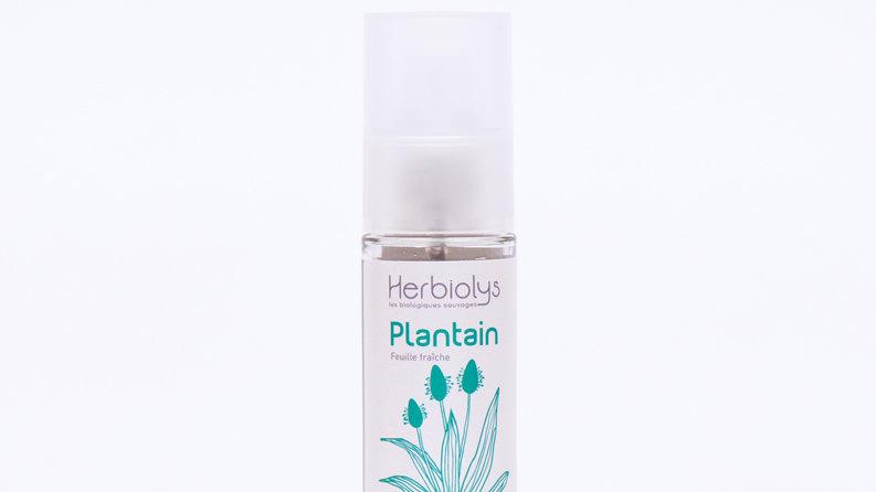 PLANTAIN 30 ml MACERAT HUILEUX