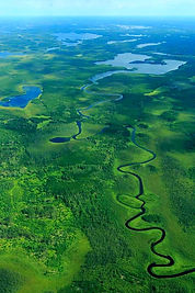Woodland Caribou Provincial Park Canadian Wildernes