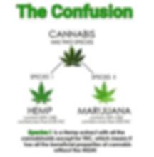 cannabis-the-confusion2.jpg