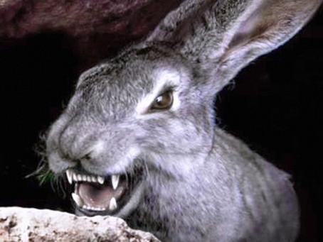 EM CASA: 7 filmes trash com coelhos bizarros para assistir nessa semana