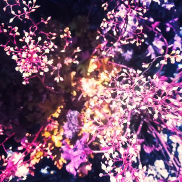 Internal Foliage