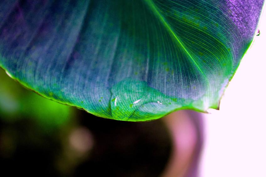 Sci-Fi Banana Leaf 2