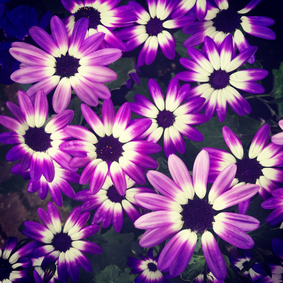 Vibrant Flower Collection