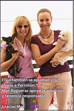 gracias+mar-perrotn.jpg