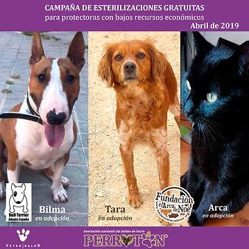 CAMPAÑA_DE_ESTERILIZACIONES_GRATUITAS_-_