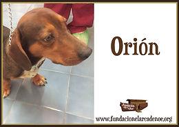 orion_d4dfca345951502425ec2c9f0e379b25.j