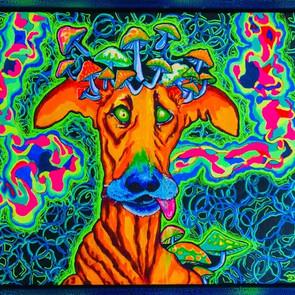 Trippy Dawg
