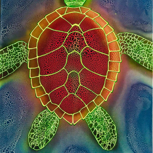 Glancing Turtle