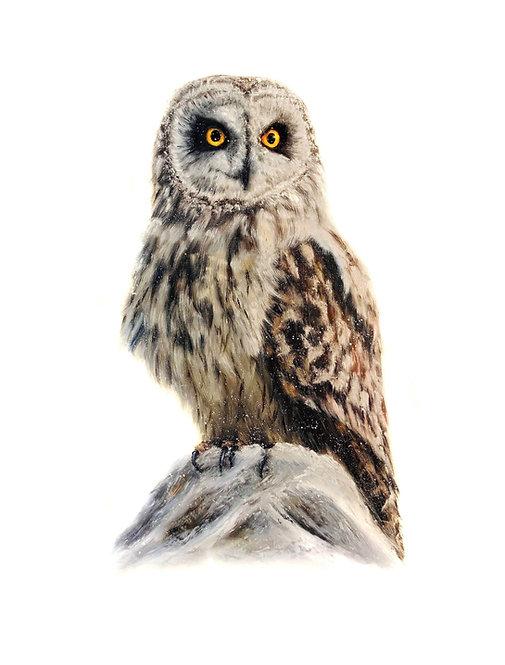 Short eared owl - Emil Jansson