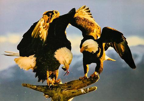 American eagles - Brutus Östling
