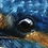 Thumbnail: Kungsfiskare - Emil Jansson