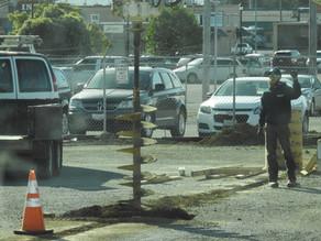 Parking Lot Light Poles?  We do that!