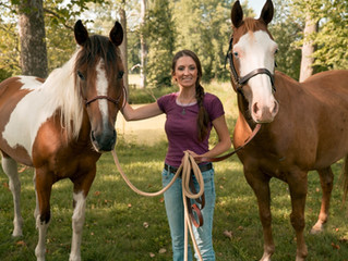 7 Principles to Understanding Horse Behavior