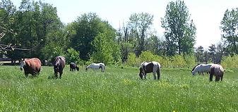 bottom pasture.jpg