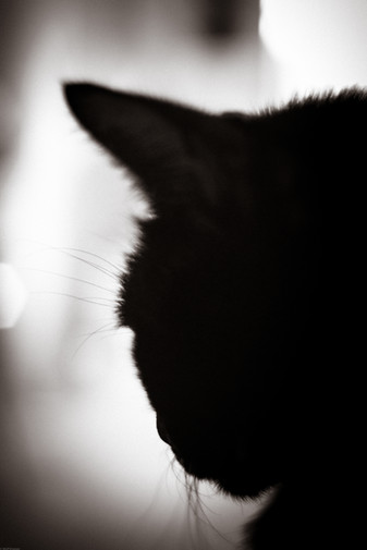 Artsy-Silhouette of a cat (pentacon50) 1