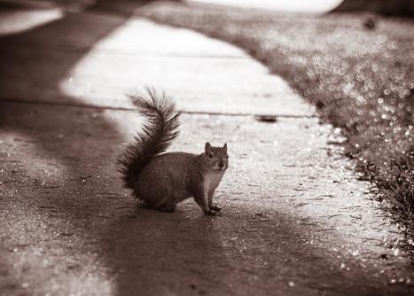 Mammals-Squirrel (FD50) 03.18.2020 -0033