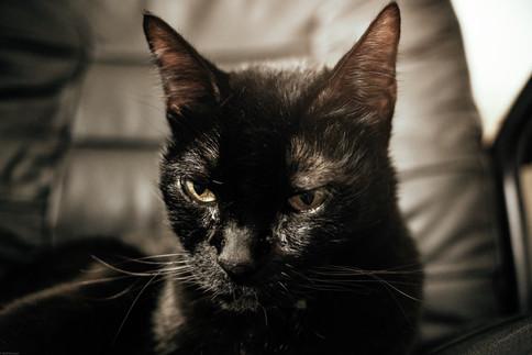 Mammals-Cat Kit Kat (pergear25*) 07.28.2