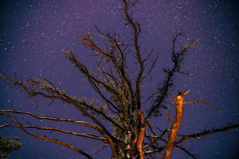 Night-Starry Night at Mount Baldy (perge