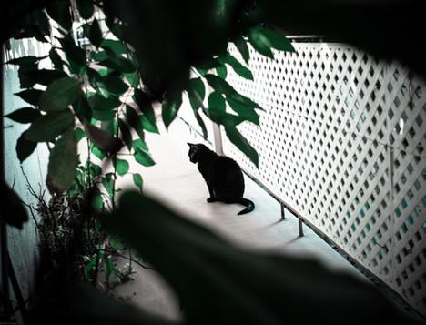 Mammals-Cat Kit Kat (takumar35) 06.26.20