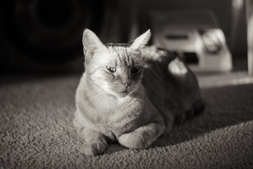 Mammals-Cat (helios)-09079.jpg