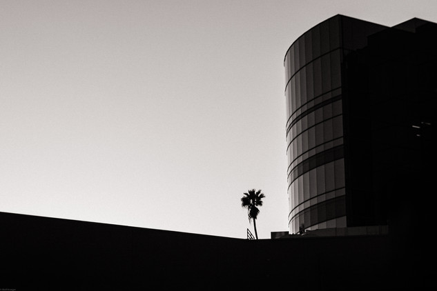 Artsy-Hollywood building and palm contra