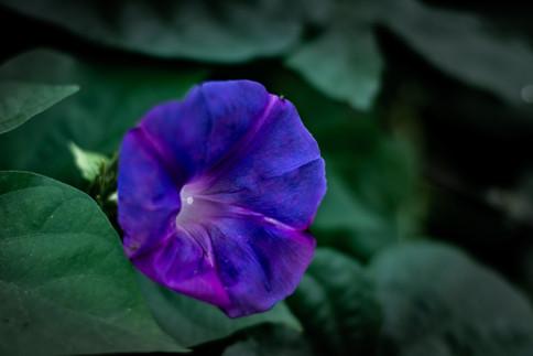 Flower-(FD50mm1.4)-00692.jpg