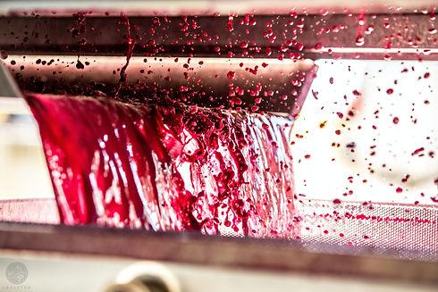 lasseter-winery-O_PKQsSplqo-unsplash.jpg