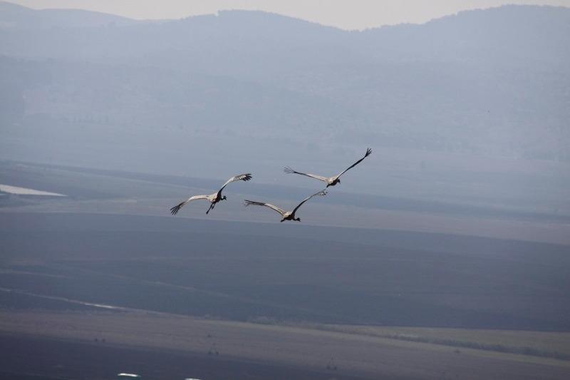 501 ציפורים נודדות (3) (800x534)_edited