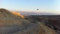 בקצב מדברי ורוח נזירית - נופי בראשית בבקעת הירדן