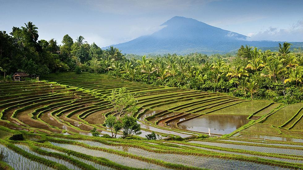 Jatiluwih and Tanah Lot Excursion