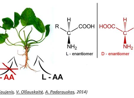 Аминокислоты в жизни растений.