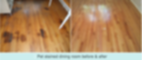 LA Splash Photo -Pet Stained Floor and P