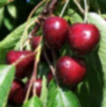 good sweet cherry (3).jpg