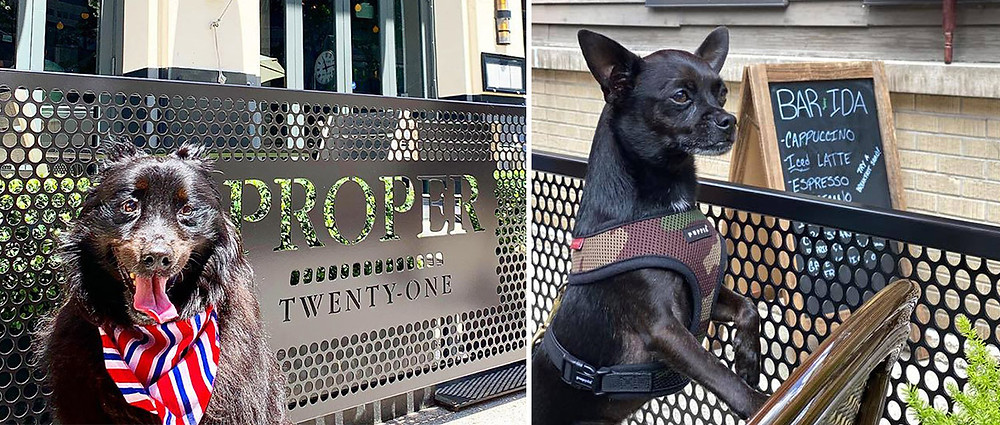 Dogs in dog-friendly outdoor restaurant patios
