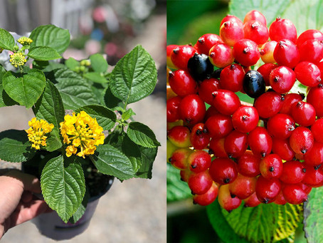 7 Common but Toxic Plants to Avoid (With Pics!)