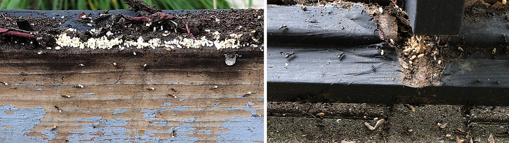 Closeup of old wooden partitions showing two ants' nests