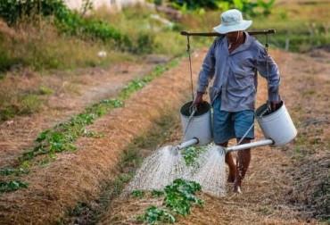 14 nuevos campesinos pueden entrar al programa alianzas productivas en Sucre